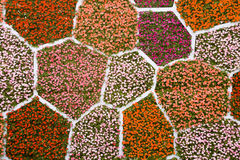 Flower wall Royalty Free Stock Images