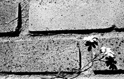Flower on the wall. Image of flower against a brick wall Stock Photography