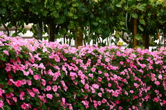 Free Flower Wall Stock Photography - 7831762