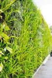 Flower wall at Ba Na Hills, Da Nang, Vietnam Royalty Free Stock Photos