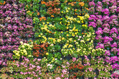 Flower wall background Royalty Free Stock Image