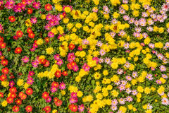 Flower wall Stock Image