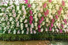 Flower Wall. Orchid decorate flower garden stock photos