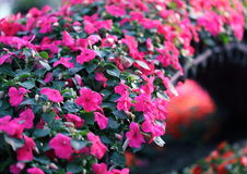Flower Wall Royalty Free Stock Photography