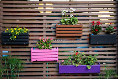 Flower wall. Flower pots on a wooden wall Stock Image