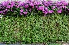 Flower on wall Stock Images