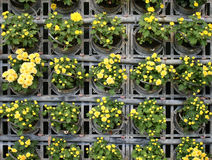 Flower wall vertical garden Stock Photography