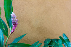 Flower on wall Royalty Free Stock Photography