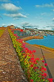 Flower wall in Wicklow Ireland Commerical Harbor and Docks Royalty Free Stock Images