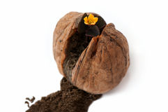 Flower in wallnut shell Stock Photography