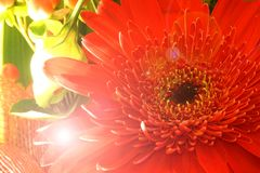 Flower wallpaper Stock Photos