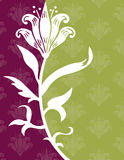 Flower on Wallpaper Background. Flower on a Green and Purple Wallpaper Background Royalty Free Stock Photography