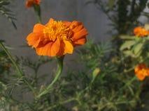 Flower wallpaper. Green orange flower wallpaper royalty free stock photos