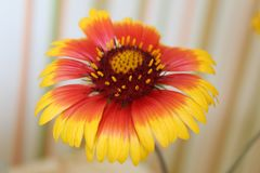 Flower that warms the soul royalty free stock photography