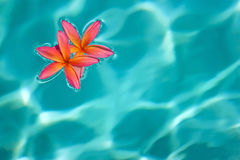 Flower water. Two flowers in sunlight turquoise water. copyspace background Stock Photos
