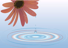 Flower of the water Stock Photography