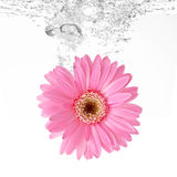 Flower and water Royalty Free Stock Images
