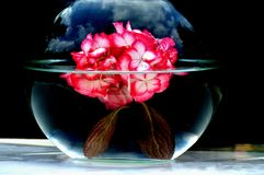 Flower water art. This one I personally love me showpieces . A flower in a bowl with water . Together with the reflection of the weather and clouds party Royalty Free Stock Images