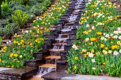 Flower Water Cascade Stock Images