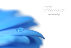 Flower with water drop. Soft focus. Made with macro-lens. Stock Photo
