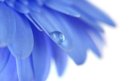 Flower with water drop. Soft focus. Made with macro-lens. Royalty Free Stock Photography