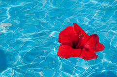Flower on water Royalty Free Stock Photo