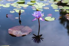 Flower, Water, Flora, Nature stock photography