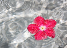 Flower in water fountain Stock Images