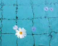 Flower in Water Royalty Free Stock Photos