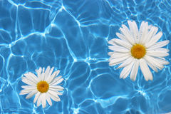 Flower in Water Royalty Free Stock Photo