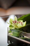 Flower or water lily decoration in glass vase on table, Buddhism and zen.  Royalty Free Stock Photography