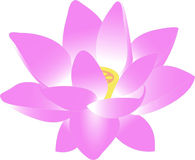Flower, Water Lily, Lily, Lotus Stock Photo