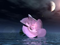 Flower in water night ,3d. Scene of the white flower rest on water,in 3 d Royalty Free Stock Image