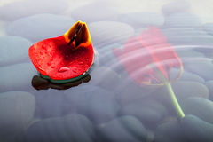 Flower on water over stones with ripples. Flower on Water in peaceful setting with stones in background and ripples Royalty Free Stock Photography