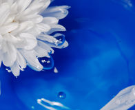 Flower on the water Royalty Free Stock Photography