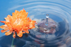 Flower On Water stock photography