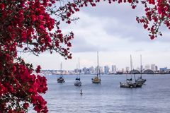 San Diego Waterfront with flowers and boats Stock Photos
