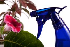 Flower and water spray Stock Photography