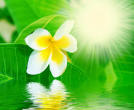 Flower water and sun rays Stock Photo