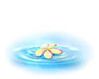 Flower in the Water. Stock Photos
