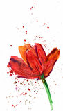 Flower, watercolor Stock Photo