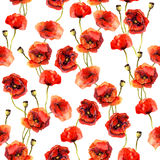 Flower watercolor backdrop with poppies Stock Image
