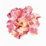 Flower watercolor background. Floral illustration. Album Royalty Free Stock Image