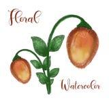 Flower watercolor design element. Watercolor floral vector art stock illustration