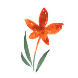Flower. watercolor floral vector illustration Royalty Free Stock Photography
