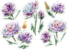 Flower and watercolor are great couple. Aster with leaves watercolor on the white background  floral seamless pattern Isolated flower and field grass whisk Royalty Free Stock Images