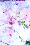 Flower watercolor illustration. Royalty Free Stock Images