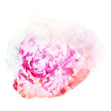 Flower watercolor illustration. Stock Images