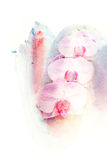 Flower watercolor illustration. Stock Photography
