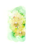 Flower watercolor illustration. Royalty Free Stock Photography